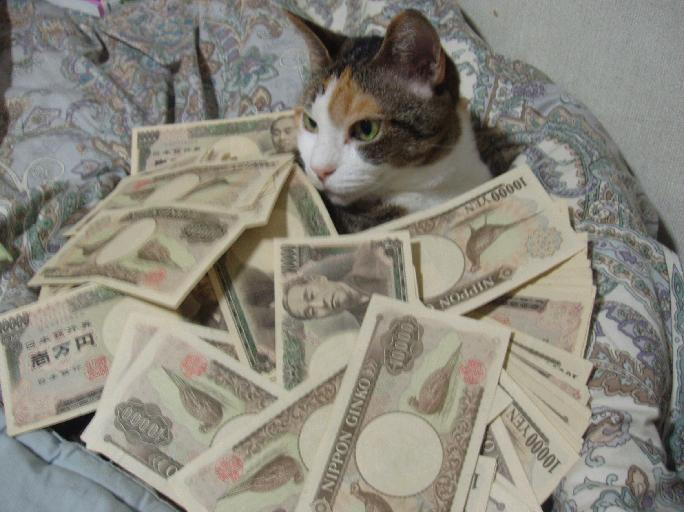猫が袋に入ってる-088