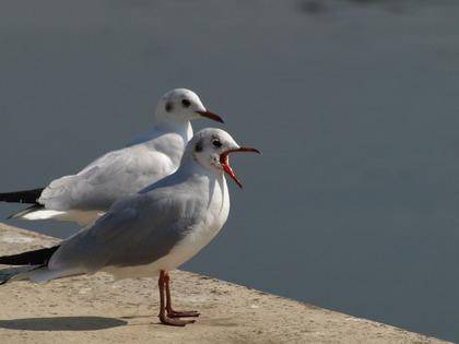 鳥の画像ください-041_1