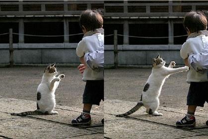 動物の笑える萌え画像-142