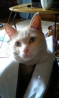 猫が袋に入ってる-033