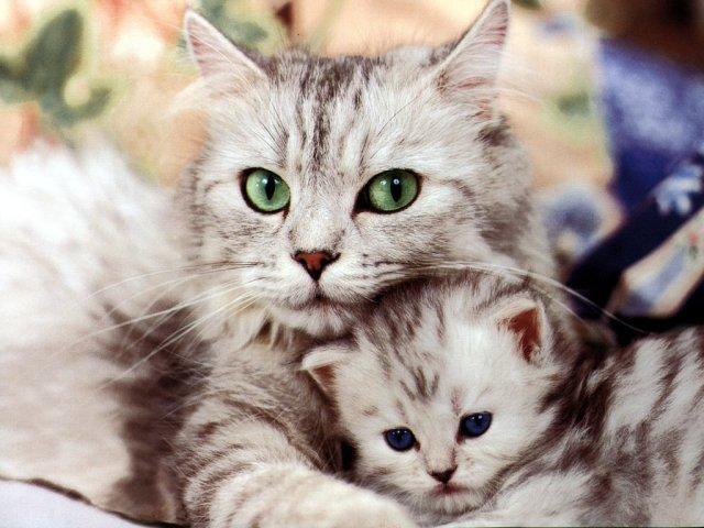 カッコいい猫の画像-103