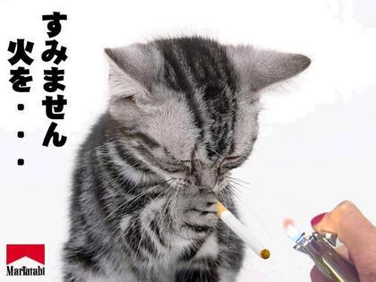 動物の笑える萌え画像-052