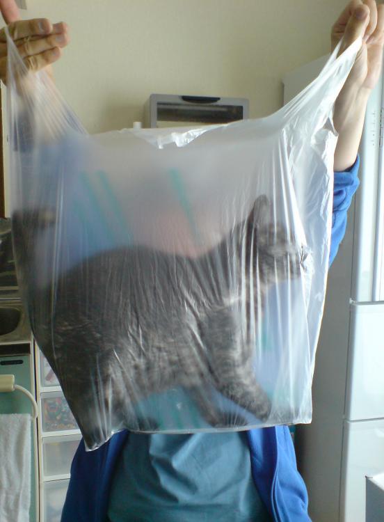 猫が袋に入ってる-001