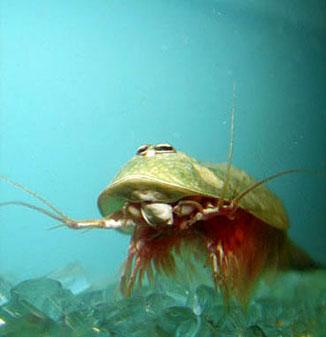 海に住む奇妙な生き物の画像-054_1