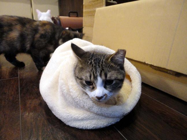 猫が袋に入ってる-030