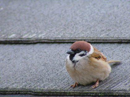 鳥の画像ください-043_3