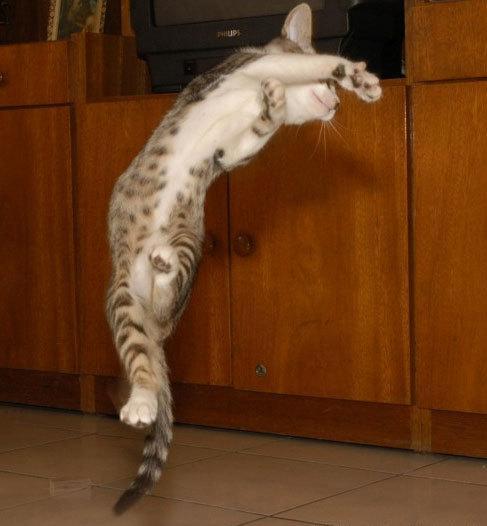 カッコいい猫の画像-043