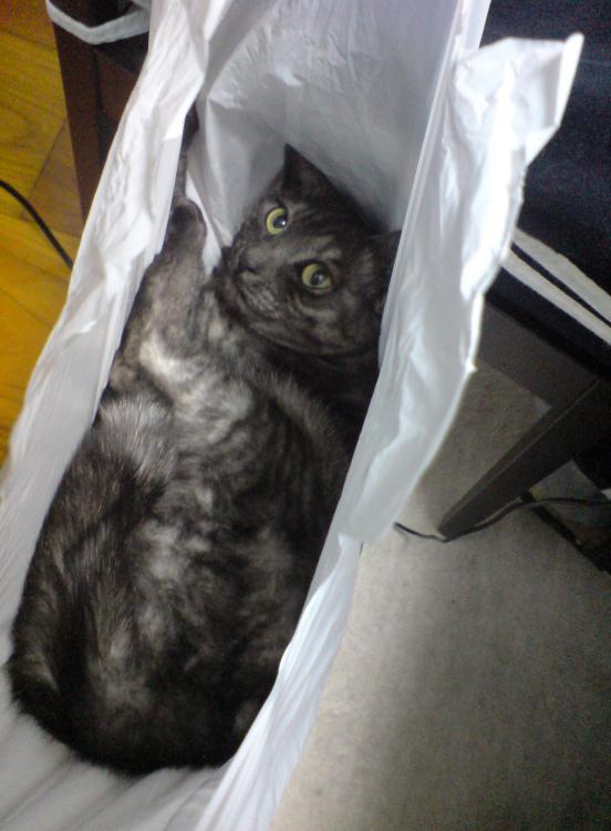 猫が袋に入ってる-004