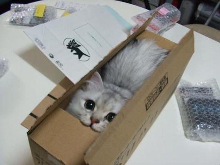 猫が袋に入ってる-116