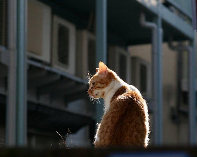 カッコいい猫の画像-137_2