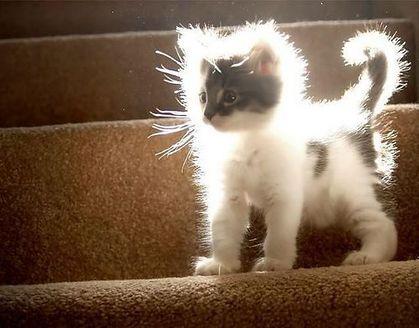 ネコの画像ください-072