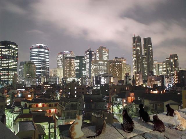 都会の画像ください-031