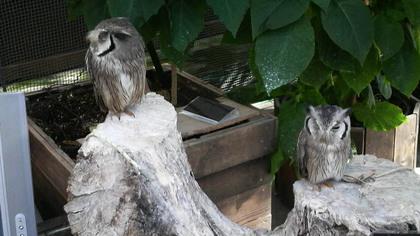 鳥の画像ください-081_9