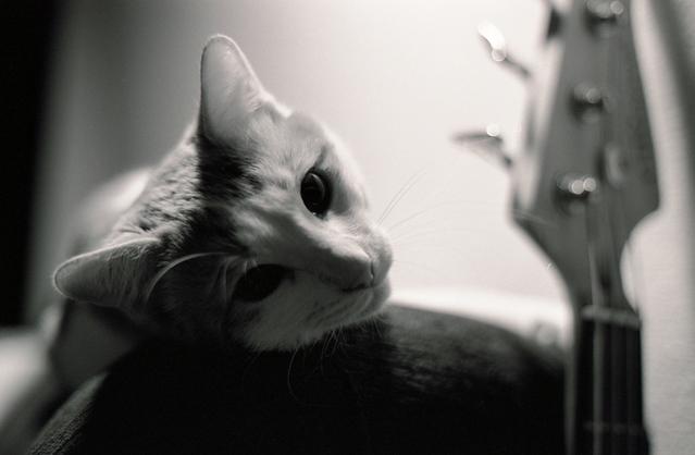 カッコいい猫の画像-068
