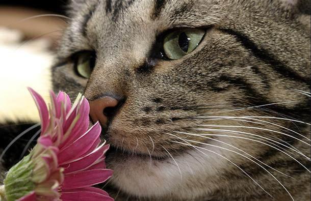 カッコいい猫の画像-125_2