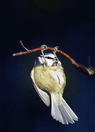 鳥の画像ください-018