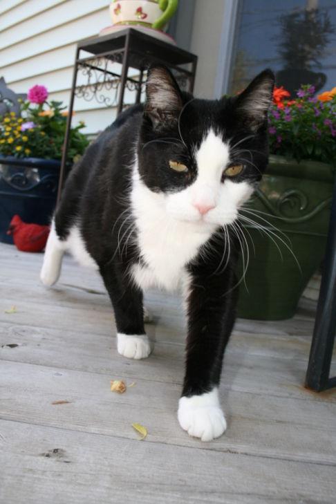 カッコいい猫の画像-165