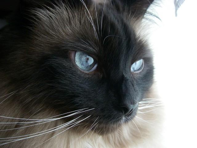 カッコいい猫の画像-022