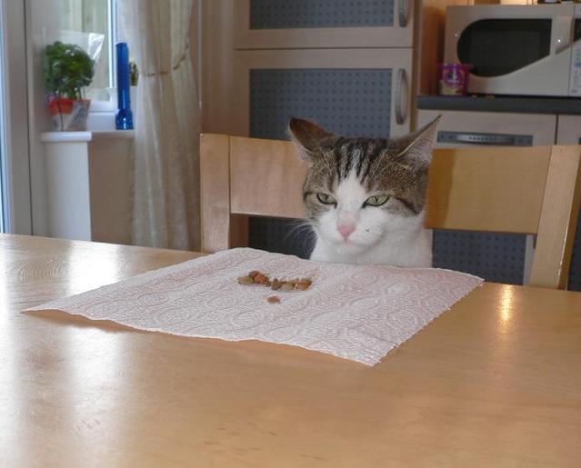 カッコいい猫の画像-012