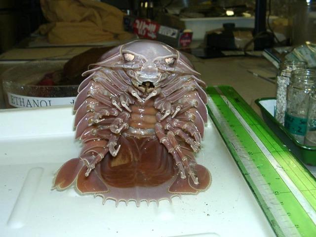 海に住む奇妙な生き物の画像-026