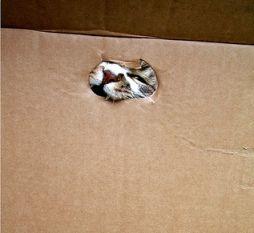 猫が袋に入ってる-043