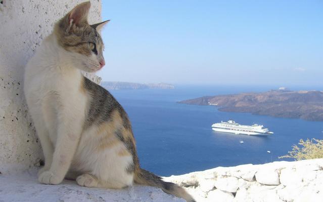 カッコいい猫の画像-020