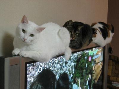 猫飼いたくなるね-051_02