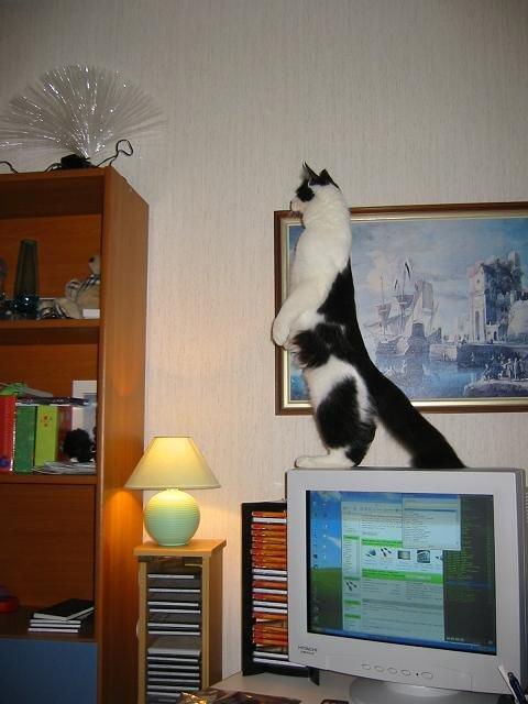 カッコいい猫の画像-153_2