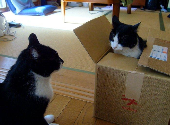 猫が袋に入ってる-136