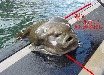 海に住む奇妙な生き物の画像-051