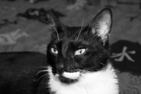 カッコいい猫の画像-174
