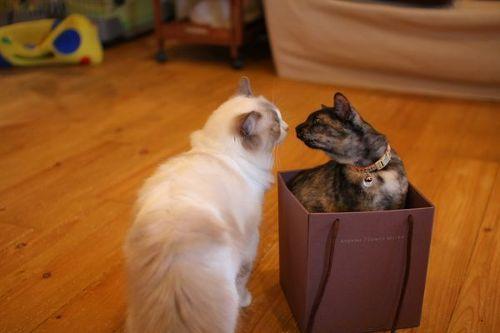 猫が袋に入ってる-025