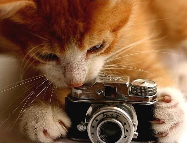 カッコいい猫の画像-067