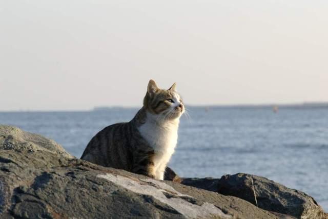 カッコいい猫の画像-142