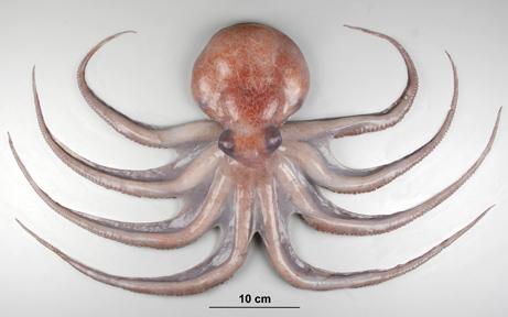 海に住む奇妙な生き物の画像-003_2
