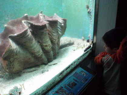 UMA・巨大生物・変な生物の画像くれ-005