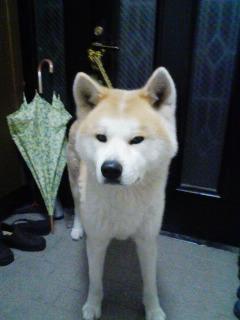 柴犬、秋田犬画像スレ-104