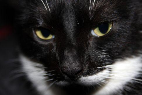 カッコいい猫の画像-172