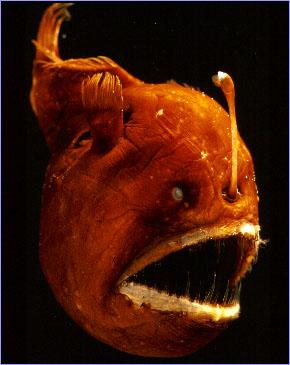 海に住む奇妙な生き物の画像-037_2