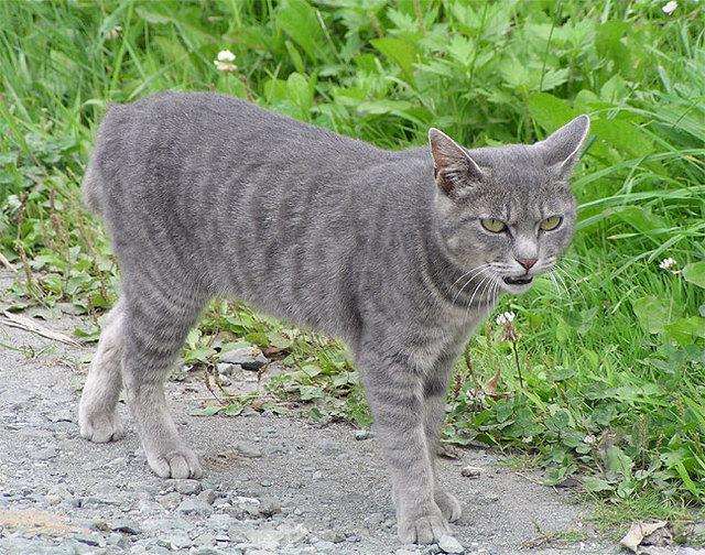 カッコいい猫の画像-144_2