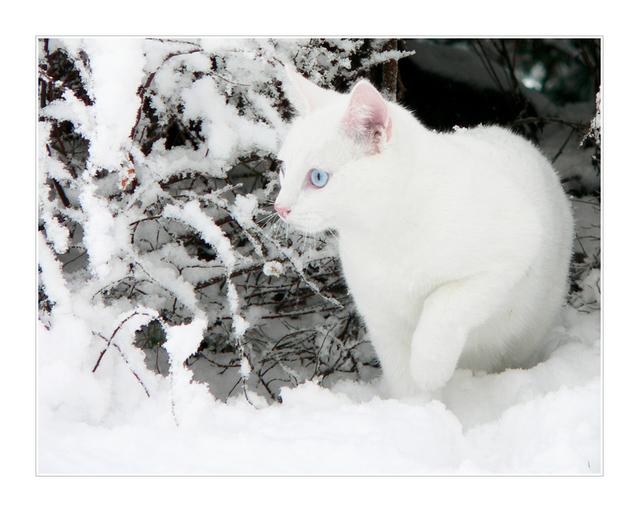 カッコいい猫の画像-084_2