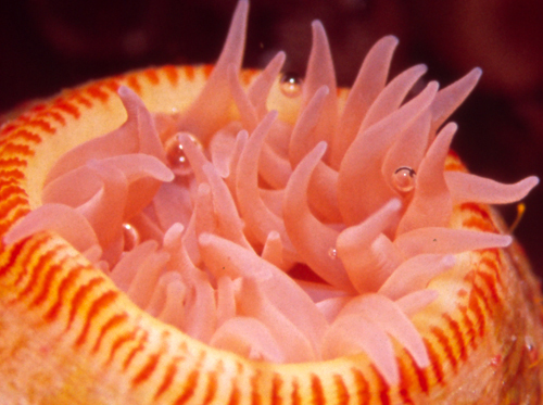 海に住む奇妙な生き物の画像-048_3