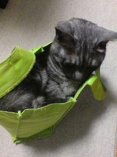 猫が袋に入ってる-028