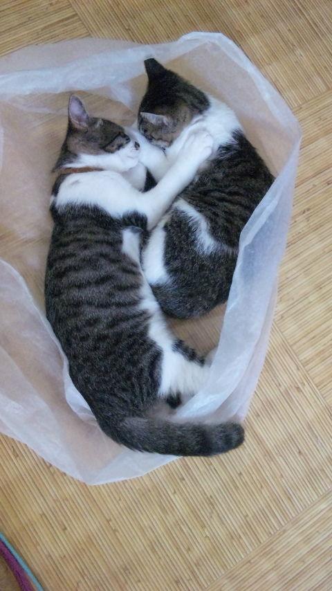 猫が袋に入ってる-082