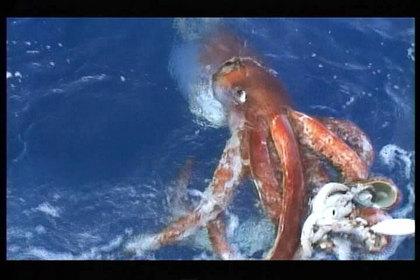 UMA・巨大生物・変な生物の画像くれ-002