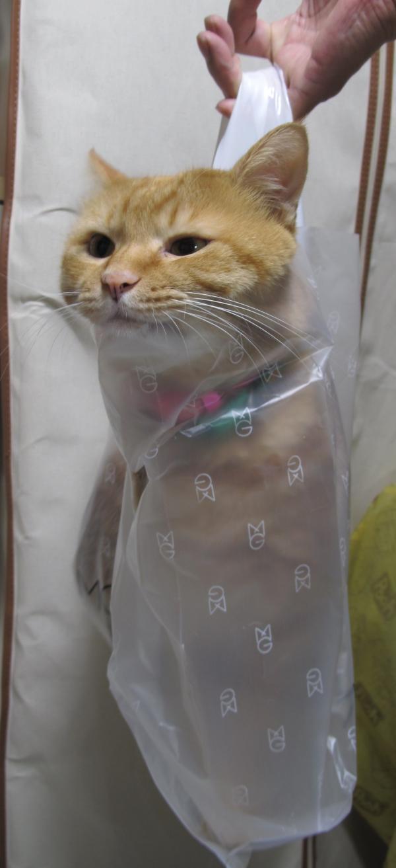 猫が袋に入ってる-061