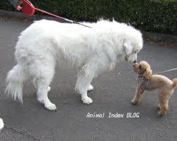 犬貼るお-084_02