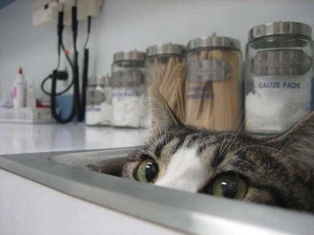 猫が袋に入ってる-094
