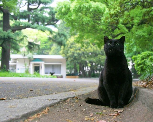 カッコいい猫の画像-137_3