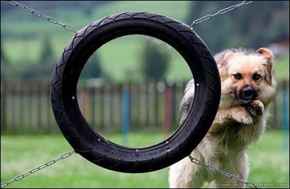 動物の笑える萌え画像-187